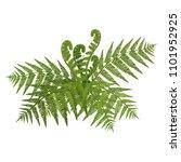 Bush Of Green Wide Open Leaves...