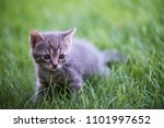 cat portrait in color | Shutterstock . vector #1101997652