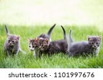 cat portrait in color | Shutterstock . vector #1101997676