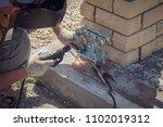 the worker installs rollers on... | Shutterstock . vector #1102019312