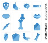 set of 13 icons such as bones...