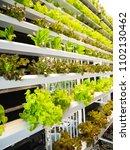 hydroponic vegetables growing... | Shutterstock . vector #1102130462
