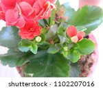 home decorative potted plant  ...   Shutterstock . vector #1102207016