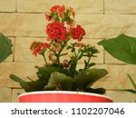home decorative potted plant  ...   Shutterstock . vector #1102207046