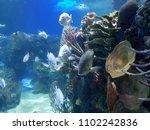 marine life in a saltwater... | Shutterstock . vector #1102242836