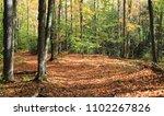 autumn walk in the woods   Shutterstock . vector #1102267826