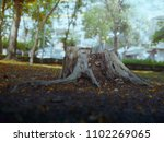 old stump  tree rood in the... | Shutterstock . vector #1102269065