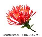 beautiful flower  group of...   Shutterstock . vector #1102316975