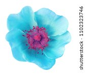 cyan pink flower isolated on ... | Shutterstock . vector #1102323746