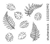 vector botanical illustration... | Shutterstock .eps vector #1102332992