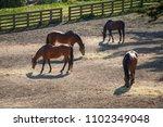 horses in the farm | Shutterstock . vector #1102349048