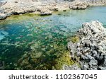 A Huge Rock Of Sea Corals And...
