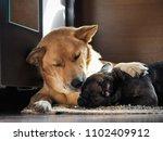 huge dog affectionately hugs...   Shutterstock . vector #1102409912
