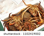 Spider crabs, fish and seafood market