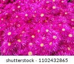 bright and beautiful blooming... | Shutterstock . vector #1102432865