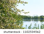Small photo of pond and blossomed tree, flowering tree on the lake, early spring blooms Bush white flowers