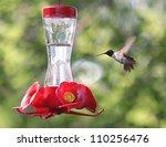 A Tiny Hummingbird Getting A...