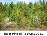 The woods in Wisconsin have many Pine or evergreen trees.  The Coniferous tree line has some other trees in the mix.