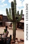 Small photo of Saguaro desert cactus