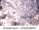 cherry blossoms in kyoto  japan | Shutterstock . vector #1102618892