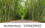Bamboo Forest At Wat...