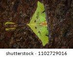 african moon moth   argema... | Shutterstock . vector #1102729016
