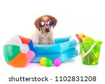 puppy brittany spaniel in front ... | Shutterstock . vector #1102831208