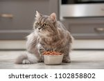 Stock photo cute cat near bowl with food at home 1102858802