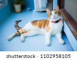 Cute Calico Cat On The Balcony