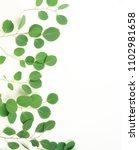 green eucalyptus branches on a... | Shutterstock . vector #1102981658