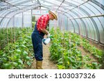 farm fresh veggies | Shutterstock . vector #1103037326