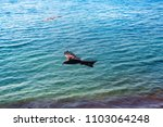 sea eagles. kites over indian... | Shutterstock . vector #1103064248