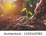 hand with green young plant... | Shutterstock . vector #1103165582