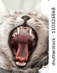 Stock photo yawning grey beautifull home cat 110326868