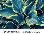 close up tropical nature green...   Shutterstock . vector #1103382122