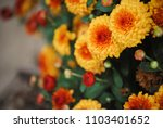 red and yellow flowers from a... | Shutterstock . vector #1103401652