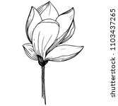 magnolia in a vector style... | Shutterstock .eps vector #1103437265