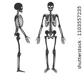 human skeleton in front and...   Shutterstock .eps vector #1103557235
