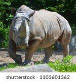 the white rhinoceros or square...   Shutterstock . vector #1103601362