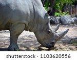 the white rhinoceros or square...   Shutterstock . vector #1103620556