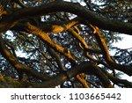 evening sun light hitting the... | Shutterstock . vector #1103665442