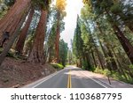 road trip in giant sequoias... | Shutterstock . vector #1103687795