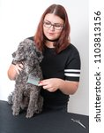 grooming a little poodle in a... | Shutterstock . vector #1103813156