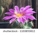 cactus pink mammalia on a... | Shutterstock . vector #1103853812