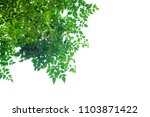 green leaves isolated on white... | Shutterstock . vector #1103871422