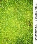 fresh grass texture background.   Shutterstock . vector #1103877818
