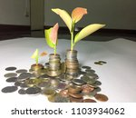 Small photo of Tree grows one day. Reduce pollution and reduce global warming.