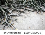 surface tree roots above the... | Shutterstock . vector #1104026978