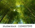 an image of bright sunlight... | Shutterstock . vector #1104037595