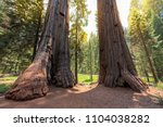 giant redwood trees at... | Shutterstock . vector #1104038282